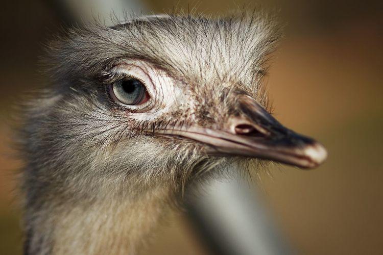 Whatcha want? Animal Animal Themes One Animal Bird Animal Body Part Close-up Animal Wildlife Ostrich Animal Head  Beak