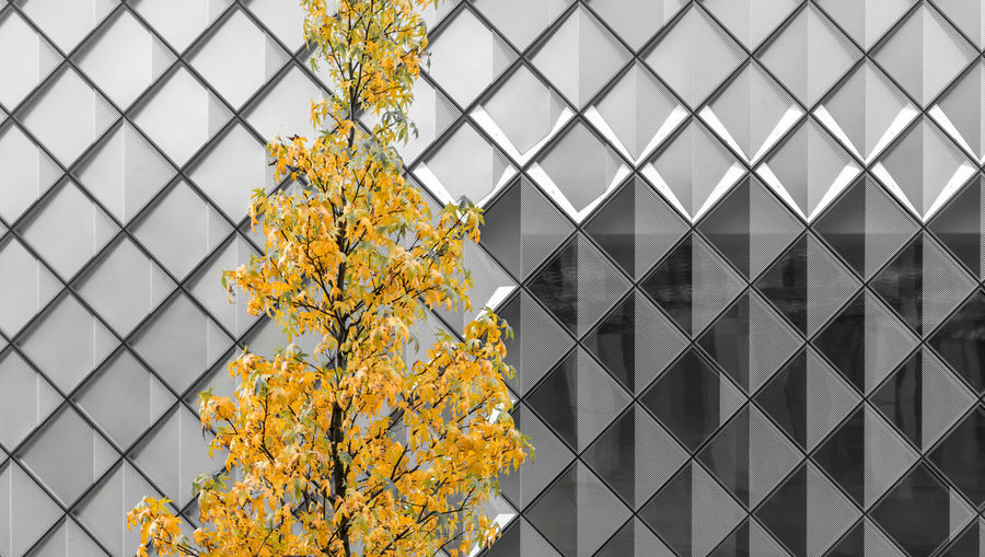 Modern Glass - Material Façade Autumn Leaves Change Copy Space Pattern Geometric Shape Krull&Krull Images Colorkey Yellow Plant Growth No People Tree Flower Outdoors Nature Day Built Structure Building Exterior Architecture Flowering Plant Close-up Beauty In Nature Fragility Tree Trunk Vulnerability  Office Building Exterior
