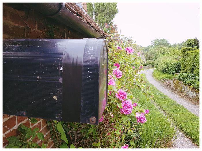 Mailboxes Mailbox Us Mail Peacefulness Peaceful View Ashford Kent Great Chart Ashford Kent Closeupshot Kent Countryside