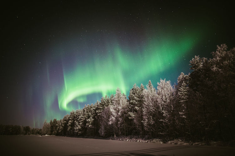 Night with polar lights Beauty In Nature Night Sky No People Nature Green Color Astronomy Winter Tranquility Star - Space Tranquil Scene Forest Illuminated Snow Aurora Borealis Northern Lights Outdoors Enjoying Life Nature_collection Landscape Travel EyeEm Nature Lover Scenics Relaxing Low Angle View