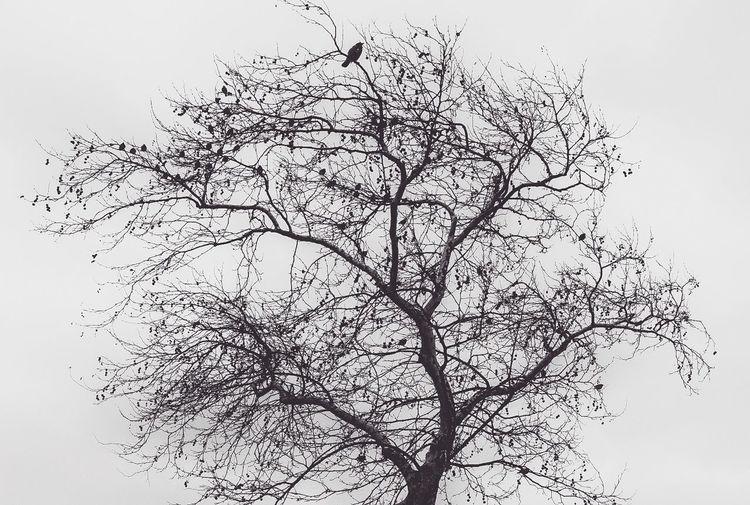 sorrow Winter
