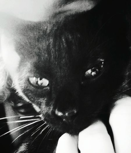 Myblackcat Darkness And Light Lovecat💜 Truelove♥ Grunge_effect Playing With Snapseed Bnw_friday_eyeemchallenge Monochrome _ Collection Aizen Black & White Blackandwhite Photography