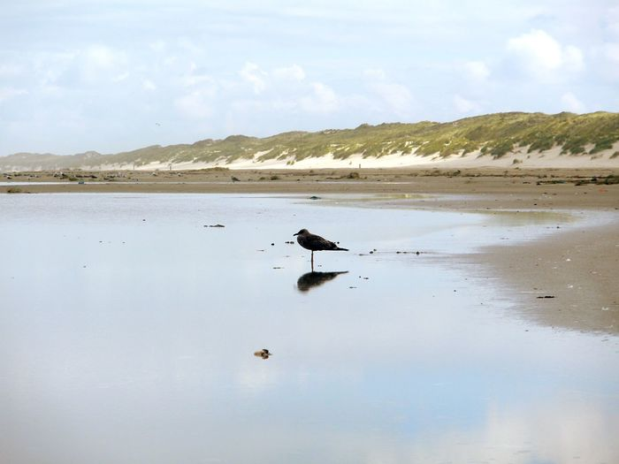 A seagull on