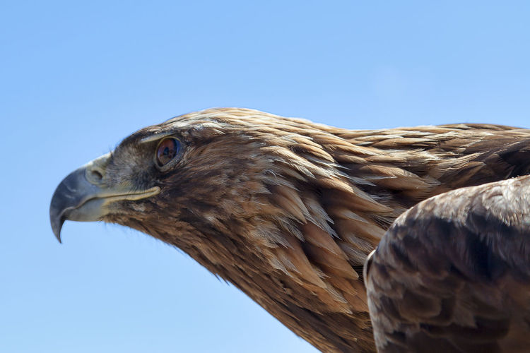 Low angle view of eagle