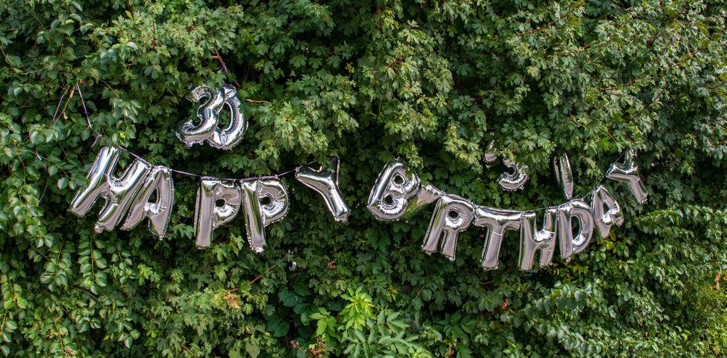 Birthday Birthday Party Birthday Present Birthday Present Birthday Celebration! Geburtstag Tree Text Communication Leaf Close-up Green Color Grass Written Street Art ArtWork Drawn Blooming Representation Spray Paint