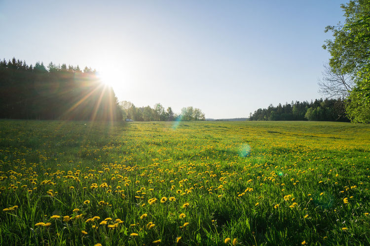 Plant Sky Sunlight Lens Flare Beauty In Nature Land Landscape Field Scenics - Nature Tranquility Nature Environment Sun Tranquil Scene Sunbeam Grass Day Flower Tree Clear Sky No People Outdoors Bright Springtime Brightly Lit Black Forest
