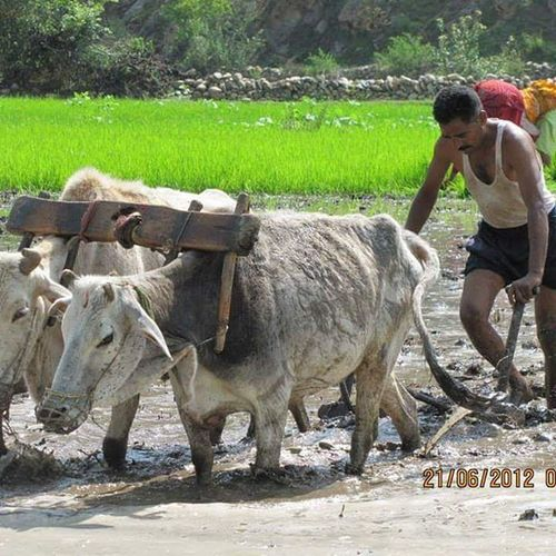 Farming in Someshwar in Uttarakhand (India). India Indiatourism Incredibleindia Uttarakhandtourism Uttarakhandculture Lpfanphoto