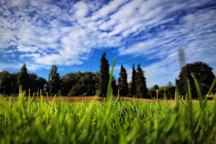 Field of Blue and Green Vancouver Marpole Field Depth Of Field Blue Sky Green Summer Afternoon Park