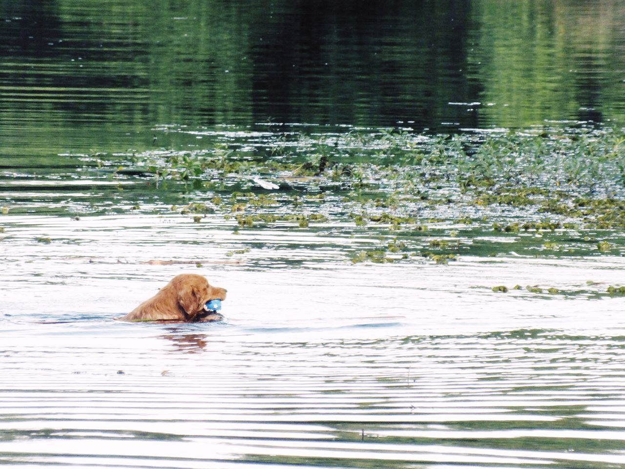 one animal, water, animal themes, waterfront, mammal, no people, nature, day, lake, outdoors, domestic animals, pets