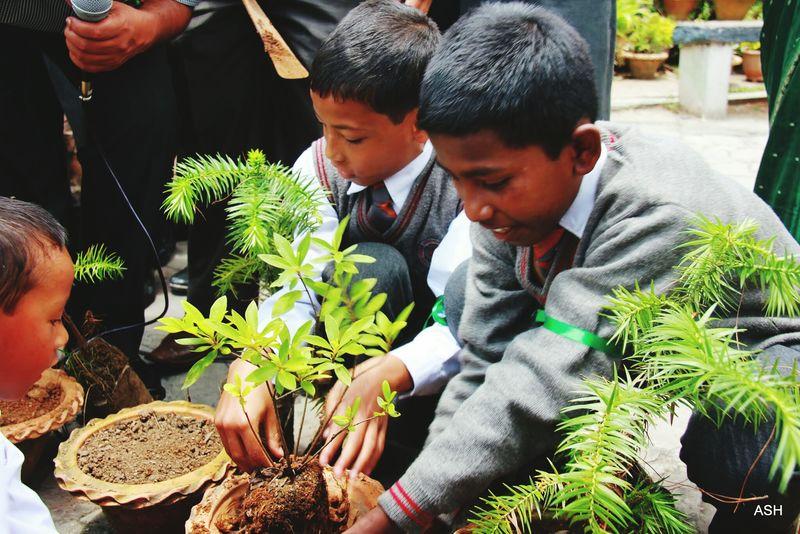 My Student Life Planting