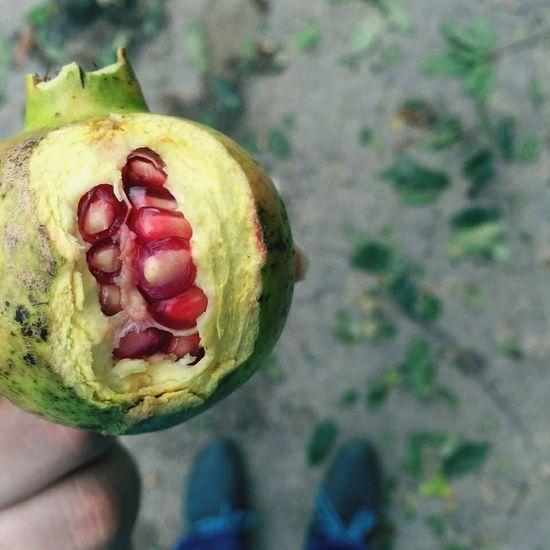 انار پاییز Pomegranate ساری