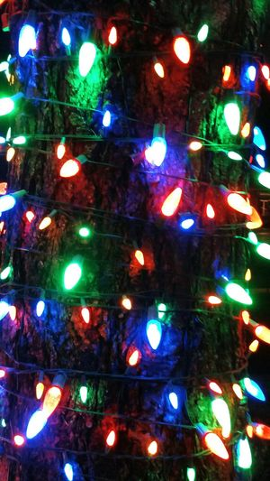 Christmas Lights Bright Colourful Tis The Season Lights On Tree Night Pictures Beautiful