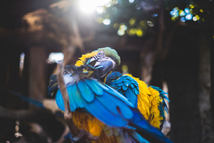Animal Themes Animals In The Wild Beauty In Nature Bird Blue Close-up Day Focus On Foreground Gold And Blue Macaw Macaw Nature No People One Animal Outdoors Parrot