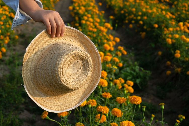 Hand Human Hand One Person Real People Plant Human Body Part Focus On Foreground Freshness Day Nature Holding Flower Flowering Plant Lifestyles Unrecognizable Person Field Leisure Activity Outdoors Close-up Finger Marigold Marigold Flower Marigold Farm