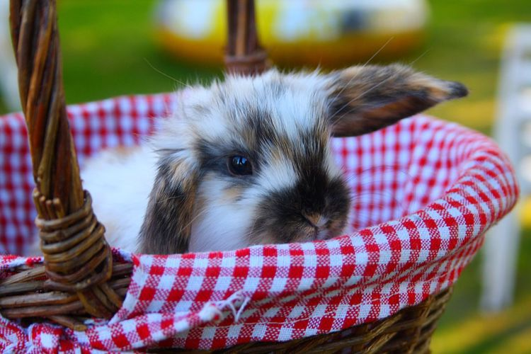 Close-up of bunny in basket