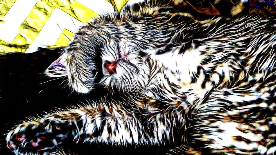 Fractal Cat Relax Relaxing Fractal Beauty Fractaldesigner Fractal Power My Cat Sleeping Sleepy Sleeping Cat Kitty Kitty Cat Kitty Love
