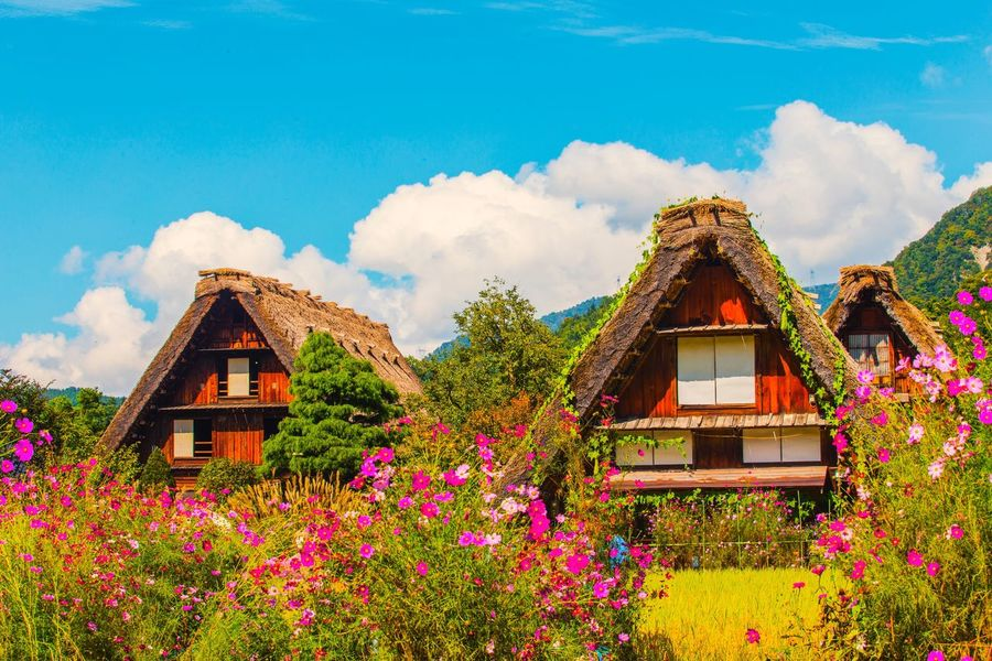 Architecture Built Structure Day Flower Outdoors House No People Nature Beauty In Nature Building Exterior Sky Cloud - Sky Plant Mountain Growth Scenics Tree Japan Sirakawagou