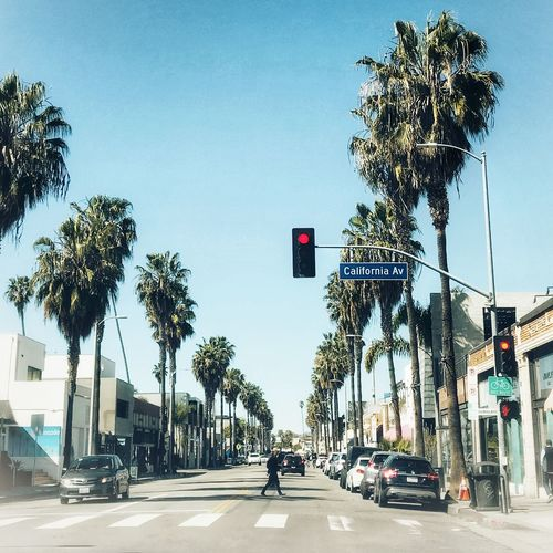 California Dreaming... ©️Amy Boyle Photography Palm Trees Palm Tree La California Tree Transportation Road Sign Car The Way Forward Red Light California Dreamin Road Street Land Vehicle Day Guidance Palm Tree Architecture Stoplight Clear Sky Outdoors City Sky
