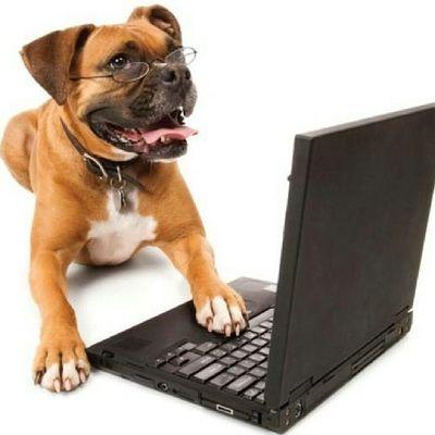 Love Dog Cute Animals