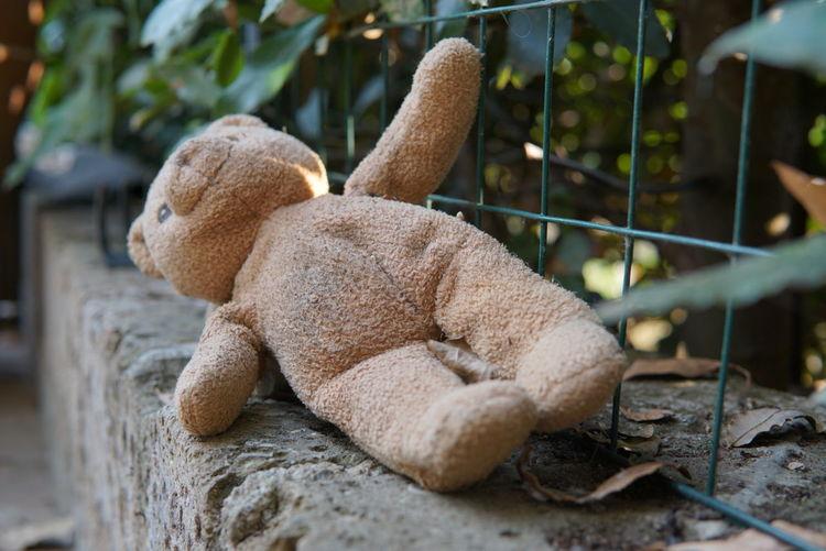 Abandoned Teddy Bear On Surrounding Wall