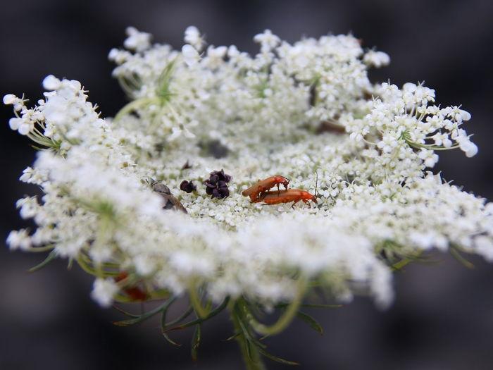 Please, do not disturb Accoppiamento Botany Day Fiori Fragility Insetti Macro Outdoors Pollen Pollination Selective Focus White Color