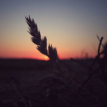 Naplemente Sunset Sunrise_sunsets_aroundworld Natural Naturephotography Nature Naturelovers Ilovenature Naturephotograph Naturephoto Növény Koponyeg Macro Beauty Q quiet
