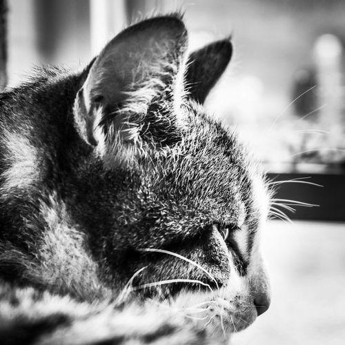 The watcher Irish Ireland Dublin Blackandwhite Bnw Cute Side View Profile DSLR Canon Kitten Cat One Animal Animal Themes Pets Domestic Animals Domestic Cat Animal Head  Close-up Feline Portrait Indoors  No People Focus On Foreground Day Mammal