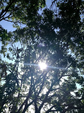 Nature Sunlight No People Outdoors Tranquility Sun Sky