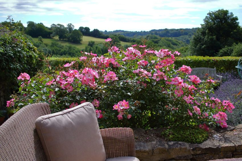 Summer in the cottage England The Cotswolds Flowers Cottage