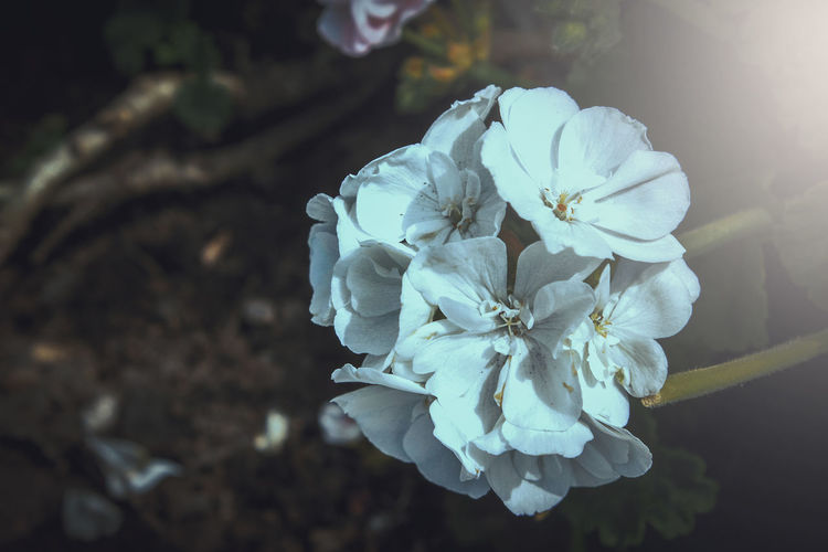 Beauty In Nature Blooming Close-up Day Flower Flower Head Fragility Freshness Growth Nature No People Outdoors Petal