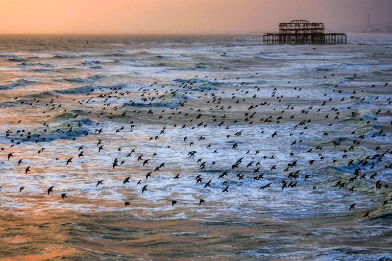 Flock of birds on beach against sky