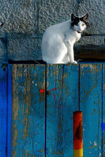 Cat Relaxing On Closed Blue Door