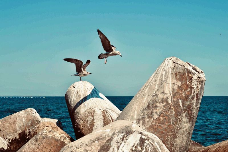Low angle view of seagulls on rock by sea against sky