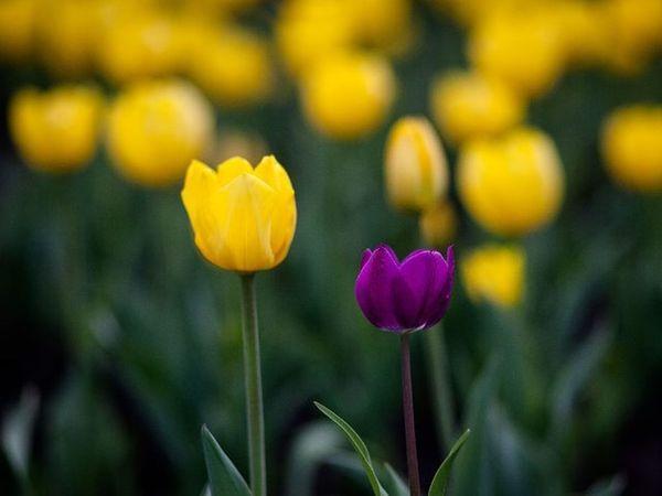 весна временагода цветавесны цветочки Тюльпаны фотография фотонастроение яжфотограф Spring Seasons Colorsnature Flowers Tulips Photo Photomood Ilike it