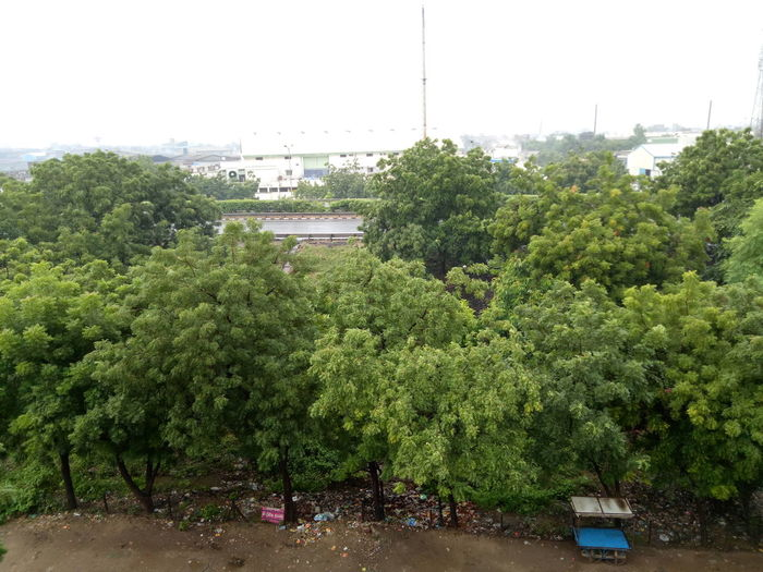 Green nime tree