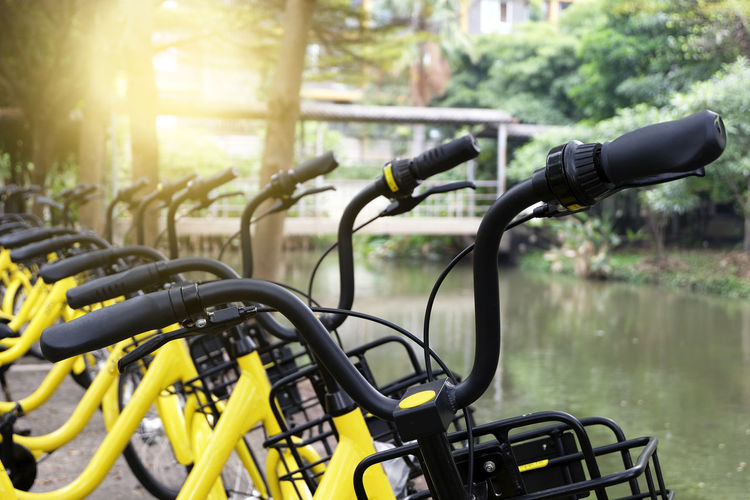 Rows of bright yellow public rental bikes on a street. Bicycle Bicycle Rack Close-up Day Focus On Foreground Mode Of Transport Nature No People Outdoors Transportation Tree