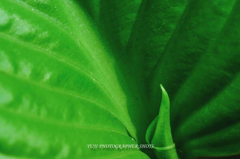 leaf Leaf Leaf 🍂 Green Leaf paga Paga Loba