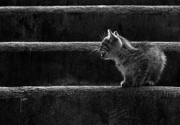Close-up of cat on retaining wall