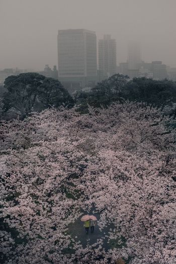 High angle view of flowers blooming on tree in city