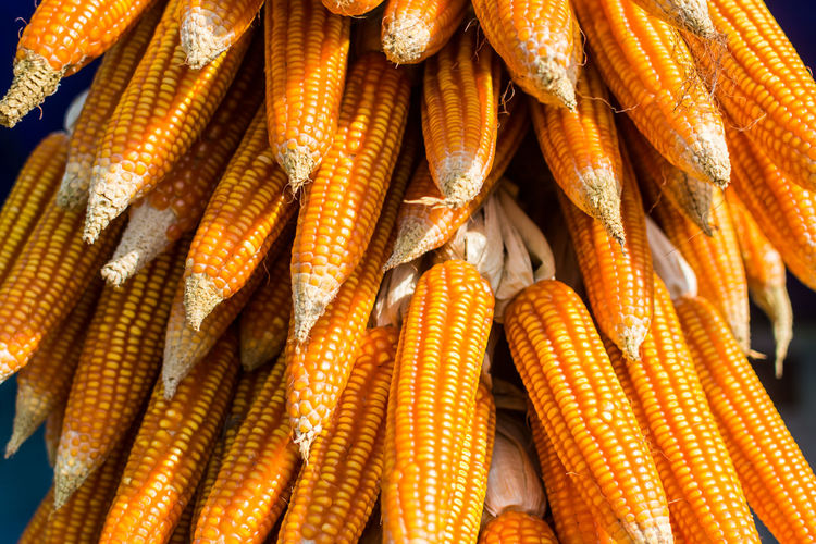 corn Backgrounds Close-up Corn Corn - Crop Corn On The Cob Day Food Food And Drink For Sale Freshness Full Frame Healthy Eating Indoors  Large Group Of Objects No People Sweetcorn Vegetable Yellow