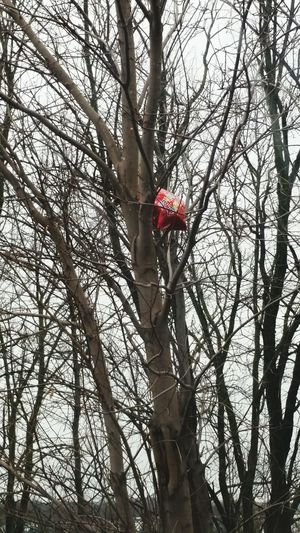 Tree Low Angle View Branch Red One Person Day One Woman Only Adults Only Beauty In Nature Outdoors People Nature Sky Adult Balloons Balloon Tranquility Nature Tree Winter Beauty In Nature Power In Nature Cold Temperature