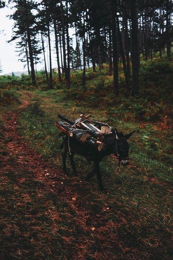 BIH Bosnia And Herzegovina Animal Themes Bosnia Day Domestic Animals Field Forest Grass Growth Landscape Mammal Nature No People Outdoors Sarajevo Tree