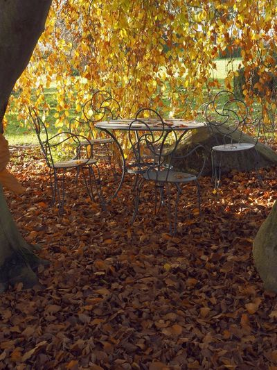 Be. Ready. To Make More Time To Relax ♡;)) Beauty In Nature Autumn🍁🍁🍁 Germany🇩🇪