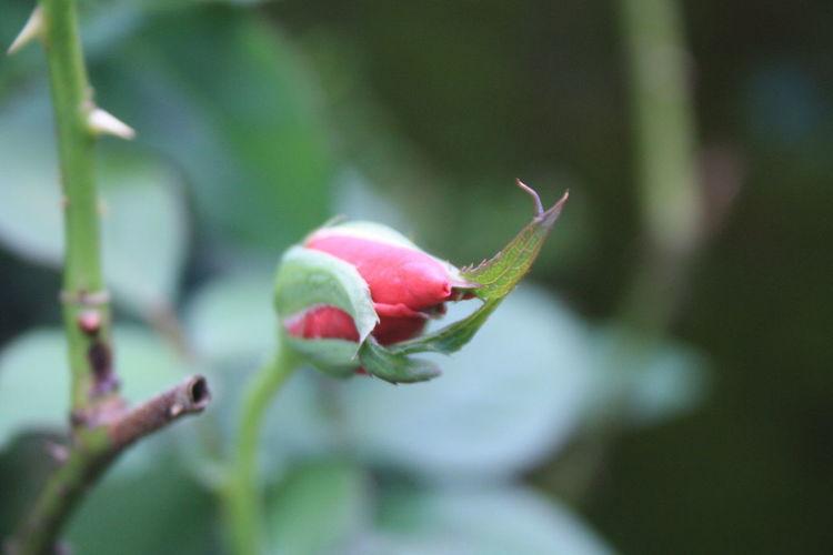 Blooming Flower Collection Flowers Flowers,Plants & Garden Green Jasmine Leaves Papaya Season