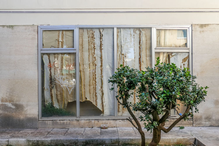 Architecture Built Structure Building Exterior Window Plant No People Day Growth Building Nature House Glass - Material Door Entrance Wall - Building Feature Outdoors Potted Plant Wood - Material Old Closed