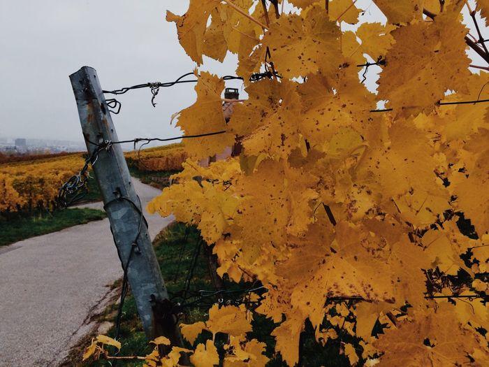 Autumn Colors Color Of Autumn Weinberg Heilbronn