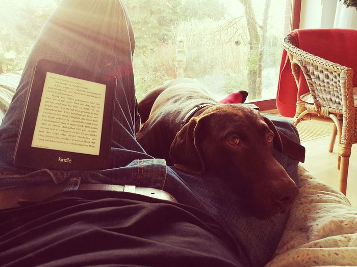 Time out. Pets People Young Adult Relaxation Indoors  One Person Dog HuaweiP9 Reading & Relaxing Kindle Ebook Chilling Sunlight Sunshine Vintage