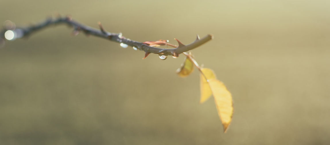Autumn Bokeh Close-up Color Cast Day Drop Flying Leaf Morning Nature No People One Animal Outdoors Spread Wings Tint Yellow