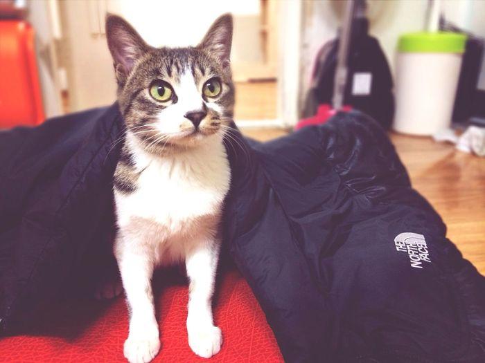 His name is Wrang-E the deung ggol breaker Cat Kitty THE NORTH FACE Wrang-E