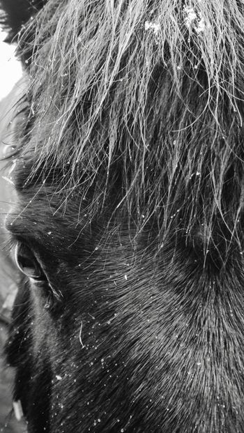 Miniature Shire Horse Close-up Horse Shirehorse Miniature Horse Horse Face Detail depth of field Macro Macro Photography Macro_collection Animal Themes Animal Horses Shire Horses Full Frame Backgrounds Abstract Textured  No People Nature Outdoors Close-up Animal Themes Mammal Day